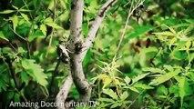 Full Documentary Films - Martial Arts Documentaries Shaolin Kung Fu - History Channel Docu