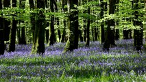3D TREES & FLOWERS-Relax Nature Sounds w/o Music-Tranquil Forest Sounds-Calming Bird Song