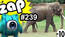 ZAPPING 239 - Buzz, Fail, Zap & Vidéo Choc n°239 ► Youclip.fr