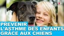 Prévenir l'asthme des enfants grâce aux chiens. Plus d'informations dans la minute chien #47