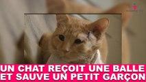 Un chat reçoit une balle perdue et sauve un petit garçon ! L'histoire dans la minute chat #49