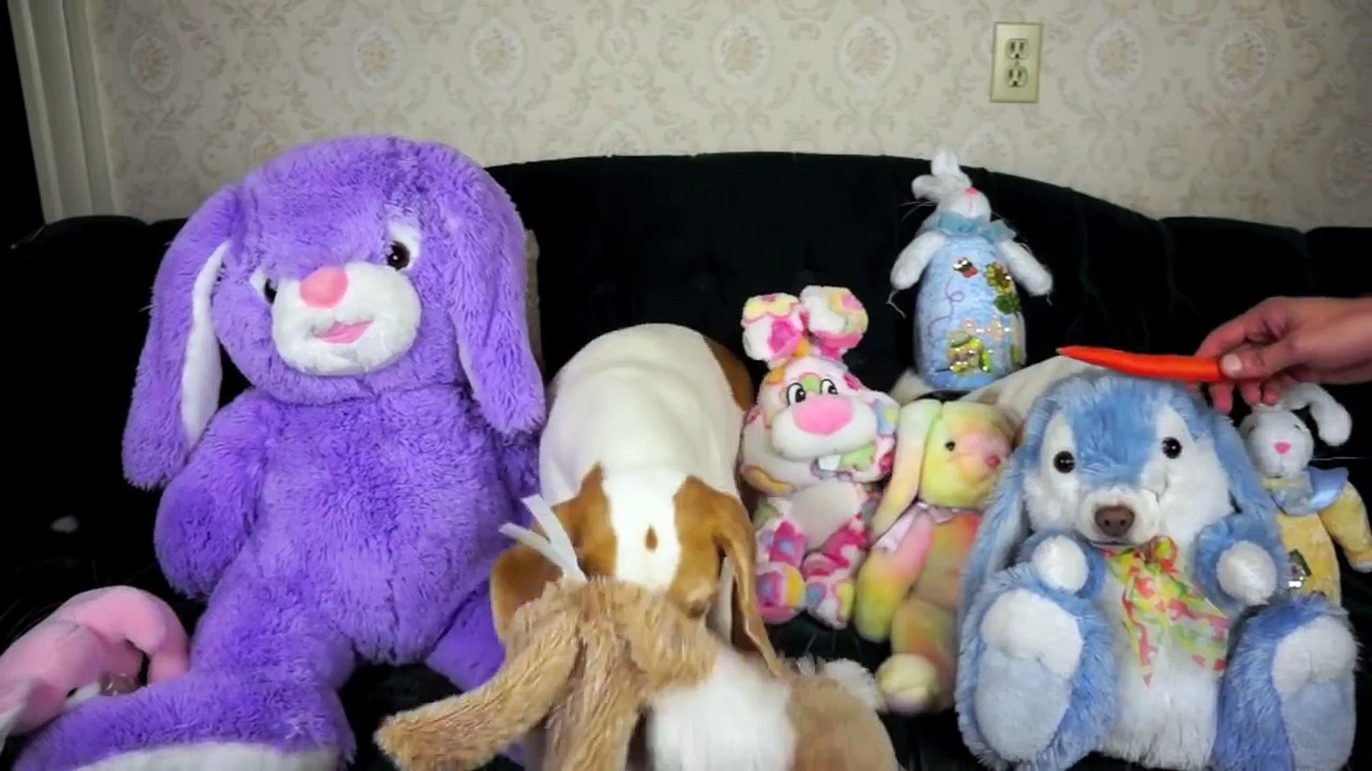 Stuffed Bunnies Come to Life- Funny Dogs Maymo & Penny