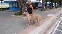 Chatte attaque un gros chien pour sauver son chaton