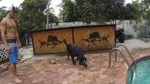 Buzz : Un chien entraîné à pêcher le homard ( How To Train Your Dog To Catch A Lobster ) !
