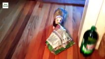 Ferrets steal everything. Funny ferrets stealing things