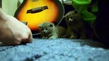 Arrullador Express. LOLcats dormido
