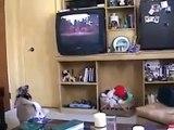 Le film pour le chien. Funny dog en regardant un film à la télévision