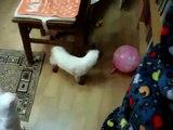 Balle soins de Cat. Drôle chat joue avec une balle