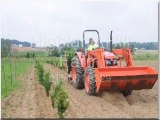 Our Acorn Seedling Growing Plan