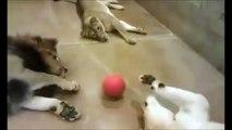 Juste des chats paresseux... Des très gros chats!