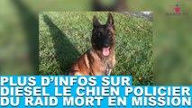 Plus d'infos sur Diesel, chien policier du RAID mort en mission. Tout de suite dans la minute chien #54