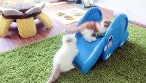 Avec ces petits chatons, jamais une glissade sur toboggan n'a été aussi belle