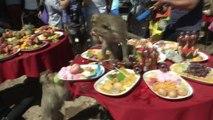 Monkeys Gorge on  4,400 Pound Feast at Monkey Buffet Festival