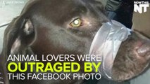 Woman Posts Photo Of Abused Dog on Facebook, Police Depts. Get Thousands Of Calls