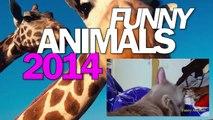 Funny Animals Compilation 2014 l Funny Cat Dog l Fun l Подборка с Животными