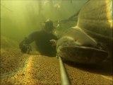 Plongée dans la Plongée dans la Loire: énormes silures, carpes et sandres !!