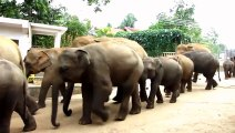 African Animals   Elephants Documentaries   African Elephants   Animal Videos   Forest Animals (2)