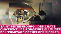 Saint-Pétersbourg : Des chats chassent les rongeurs au musée de l'Ermitage depuis des siècles. À voir dans la minute chat #56