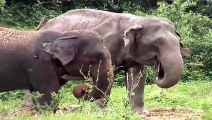 African Animals   Elephants Documentaries   African Elephants   Animal Videos   Forest Animals