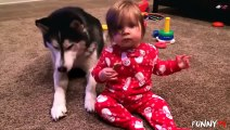Animal Videos   Animals Feeding   Dog - Animal   Baby And Puppy   Puppies   Puppy Dogs   Dogs Video