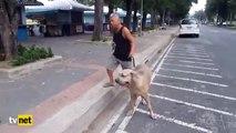 Yavrusu için dev köpeğe saldıran kedi