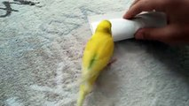 He Let His Bird Say Goodbye To A Dead Friend -- This Will Surely Break Your Heart