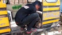 Emouvant : découvrez le sauvetage de ce chien abandonné