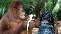 Las mascotas son tan gracioso cuando comen. Recogida de animales divertidos y lindos