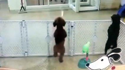 Des chiens dansent sur un morceau de Coldplay