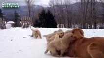 Cães e gatos. Inverno Gatos e cães brincando na neve