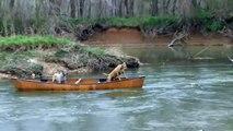 Un chien futé sauve deux autres chiens coincés dans un canoë