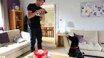 Comment jouer à cache-cache propriétaire de chien et le chien sont en jouant à cache-cache