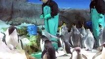 Osaka Aquarium Kaiyukan 大阪海遊館 Travel World