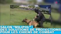 """Salon """"Milipol"""" : Des solutions de protections pour les chiens de combat. Découvrez les dans la minute chien #58"""