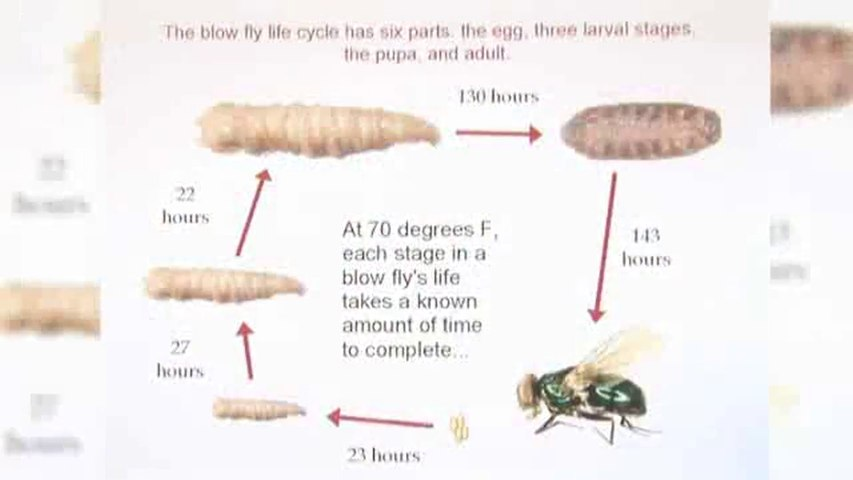 What is forensic 'entomology'?: Special Fields Of CSI
