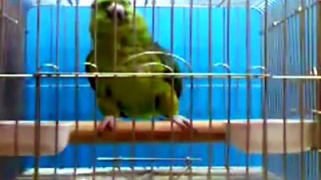 Parrot Reciting Quran Majeed  Subhan Allah