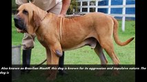 Top 10 Most Dangerous Dog Breeds Most Likely to Turn on Their Owners