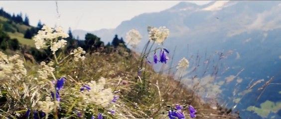 Belle & Sebastien - L'Avventura continua. Clip - La corsa sullo slittino