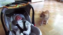Chats voient d'abord les bébés. Les chats et les enfants drôles
