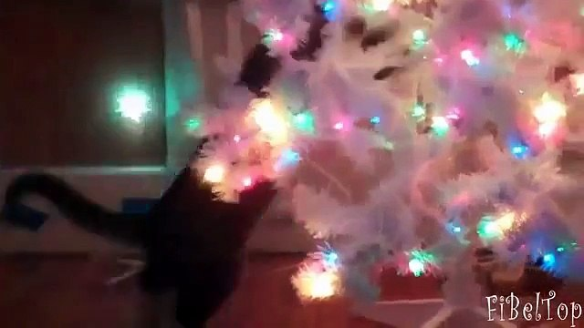 Cats decorate the Christmas tree. Funny cats and Christmas trees