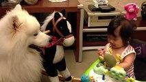 Gatos, cães e crianças - Animais engraçados e crianças