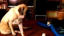 Chats dormir sur le sol pour les chiens. Amusez-vous avec chiens et chats
