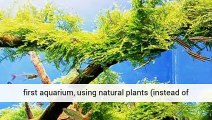 Aquarium Plants Beginners Sales And Information Uk