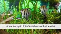 Aquarium Plants Driftwood Professionals UK