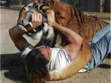 Lion Attack Friendly Powerful and Most Best Wild Animal Videos Full length BBC documentary 2015 Top 5 Wild Animal Attacks Lions DEADLY ATTACK on ANIMALS - Lions fighting to death Wild HQ Lions Most Powerful and Dangerous Attack on other Animals