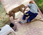 Lions DEADLY ATTACK on ANIMALS - Lions fighting to death Wild HQ Lions Most Powerful and Dangerous Attack on other Animals  Best Wild Animal Videos