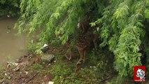 A Deer caught in flood Chennai rain