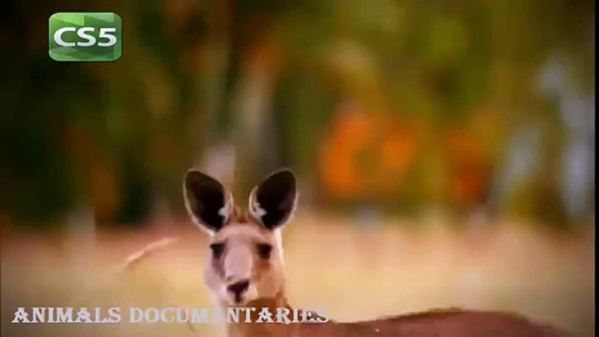 National Geographic Documentary Animals 2015 - Wildlife Lions Animals