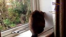 Gatos e cães contra moscas - uma coleção de animais engraçados
