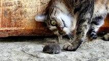 Les chats sont peur des souris et des oiseaux - chats drôles (compilation)
